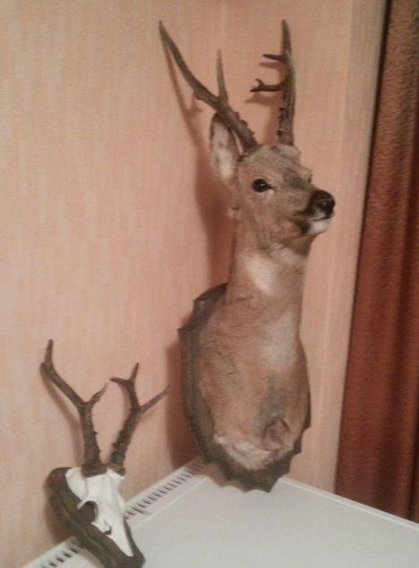 Охота в Курганской области